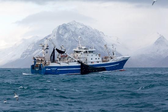 Purse seine nets from v nin for Purse seine fishing